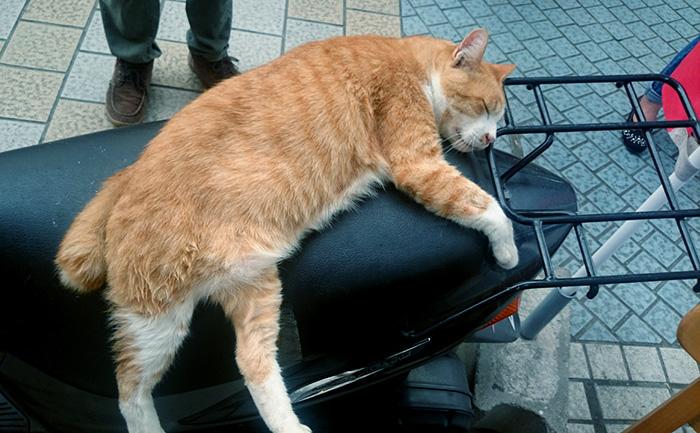猫が気持ちよさそうに寝てました