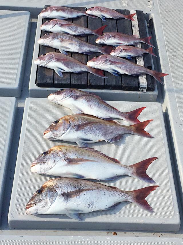 男木島沖で、大漁でした