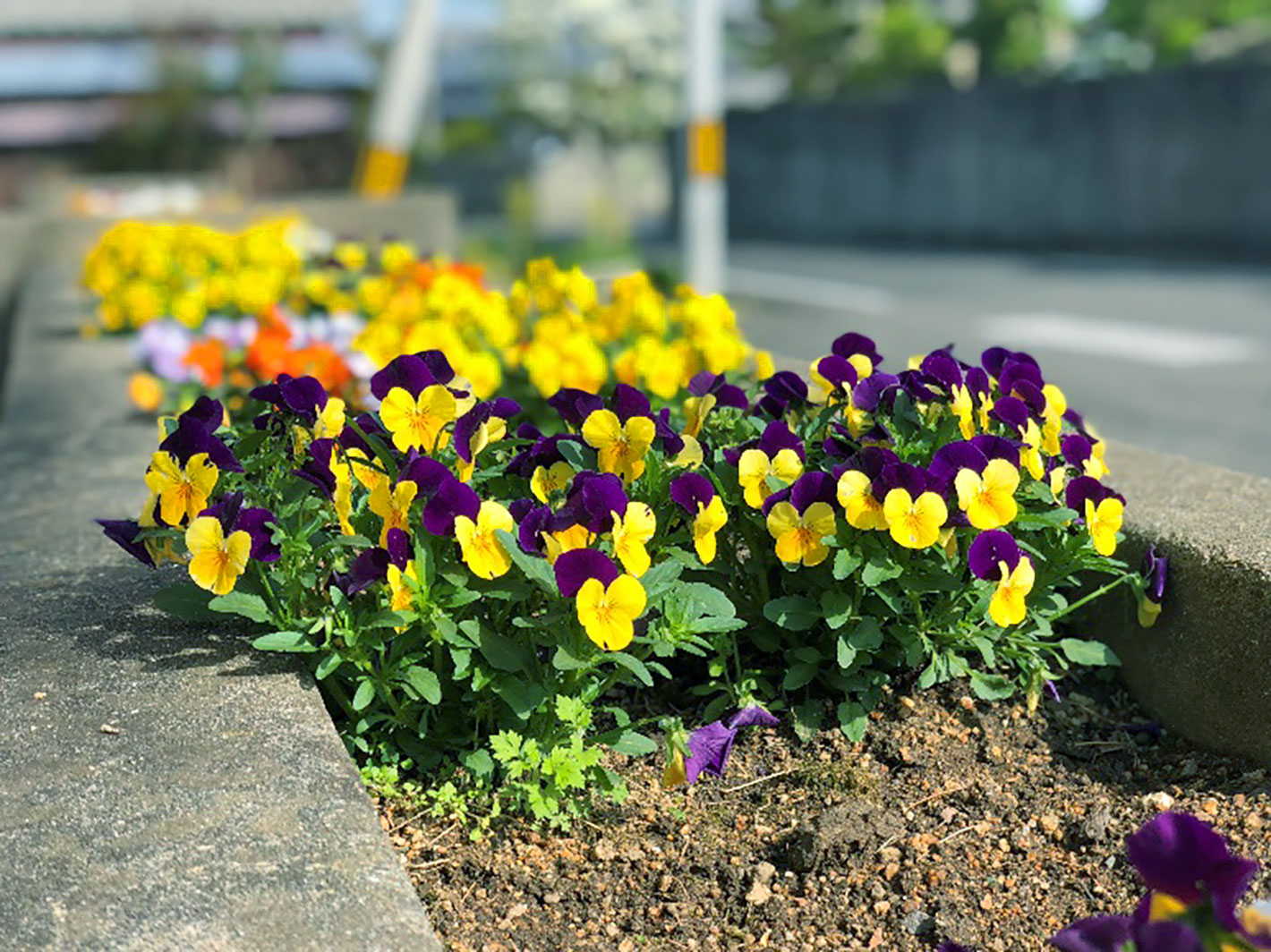 春仕様の花壇