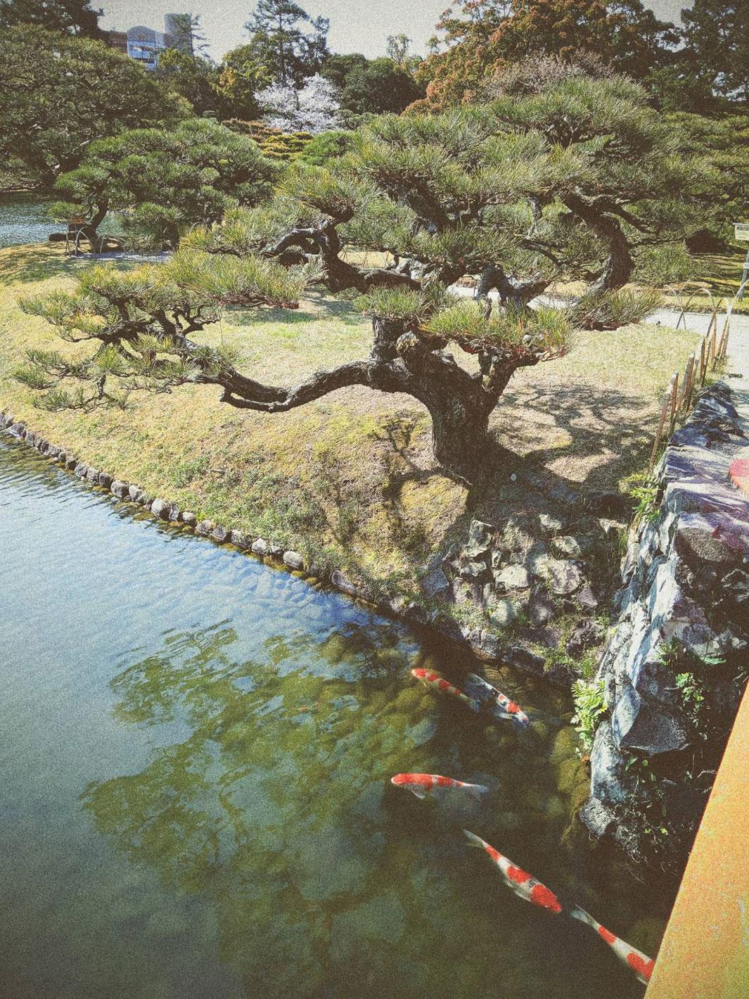 よろしくお願いします!高松の写真