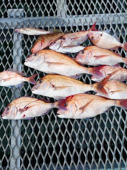釣り♥LOVE -鯛-